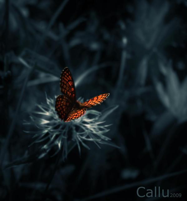Discrete Ia by Callu