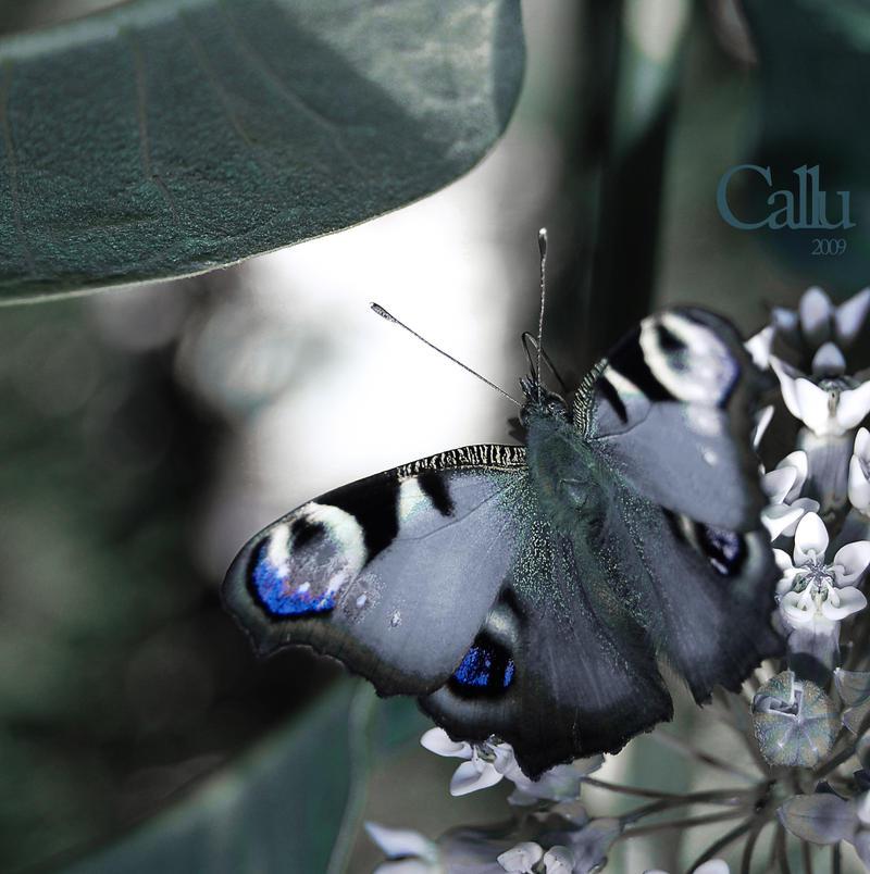 Verde Efemer by Callu
