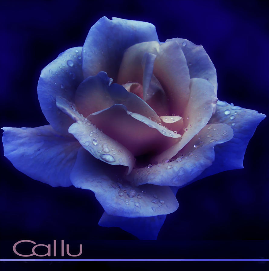 Too Blue by Callu