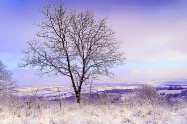 Winter 2009 II A by Callu