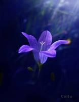 Blue Day Summer Dream by Callu