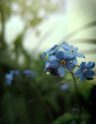 Forget Me Not Green