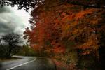 Autumn Road by Callu