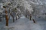 Derelict Winter Light by Callu