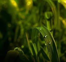 Green Savanah by Callu