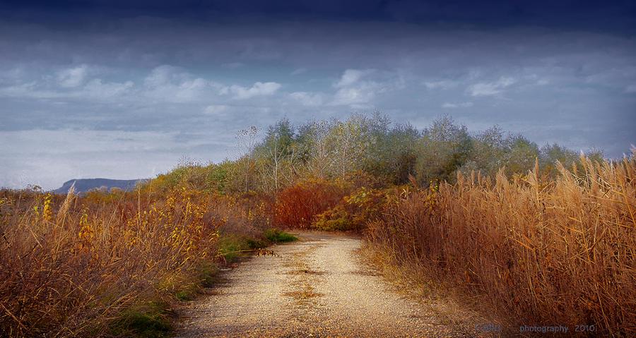 Country Road Again by Callu