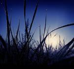 Blue Light Shiver