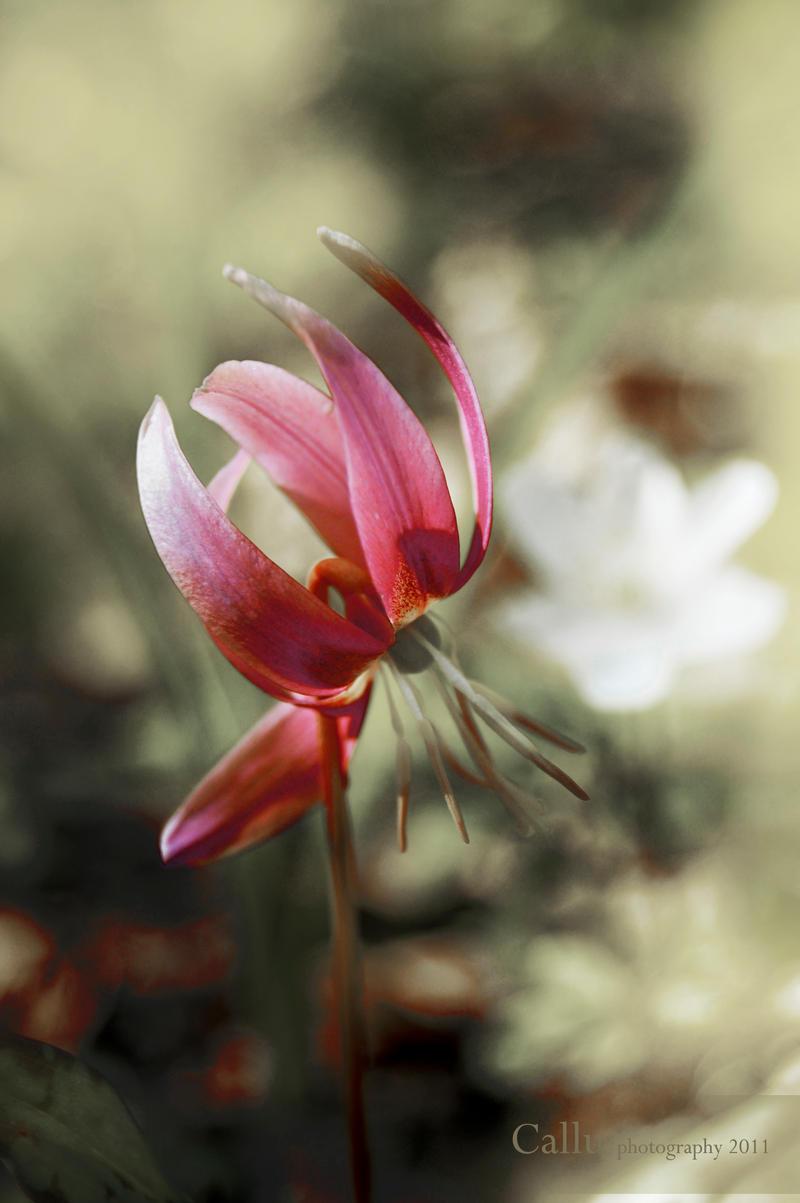 CVECE Spring_glimps_iii_by_callu-d3b40u8