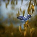 Blue 2012 by Callu
