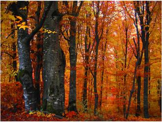Transylvania by Callu