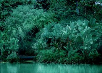 Jungle by Callu