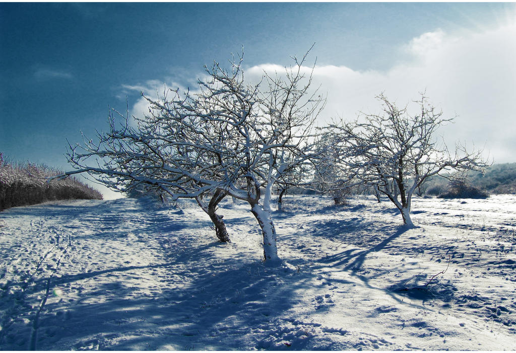 Winter II by Callu