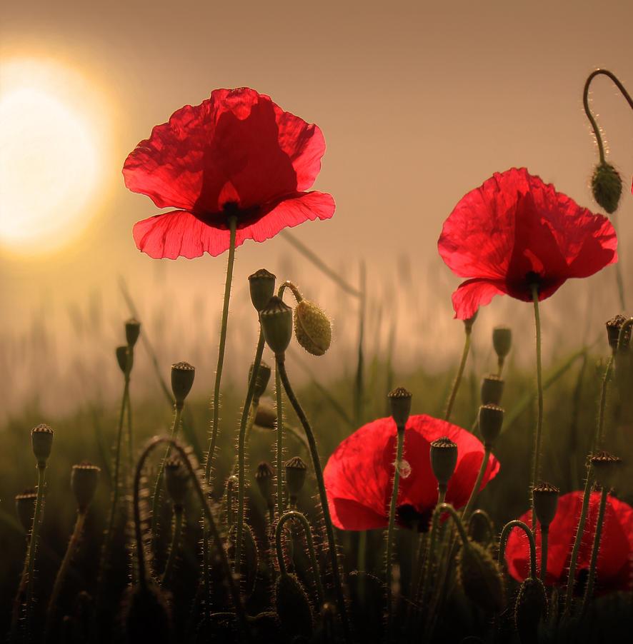 Summer Splendor by Callu