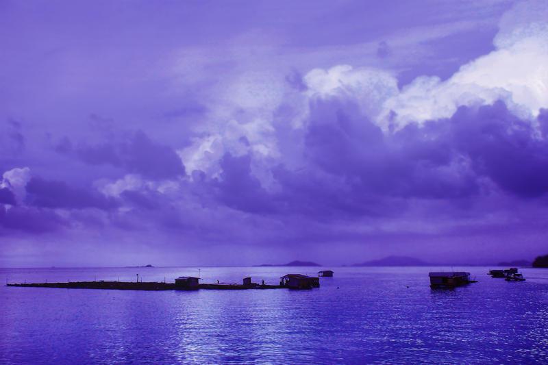 Floating Farm by Callu