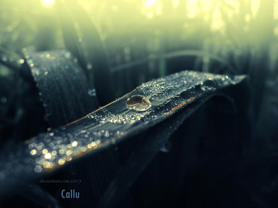 Hidden Jewel by Callu
