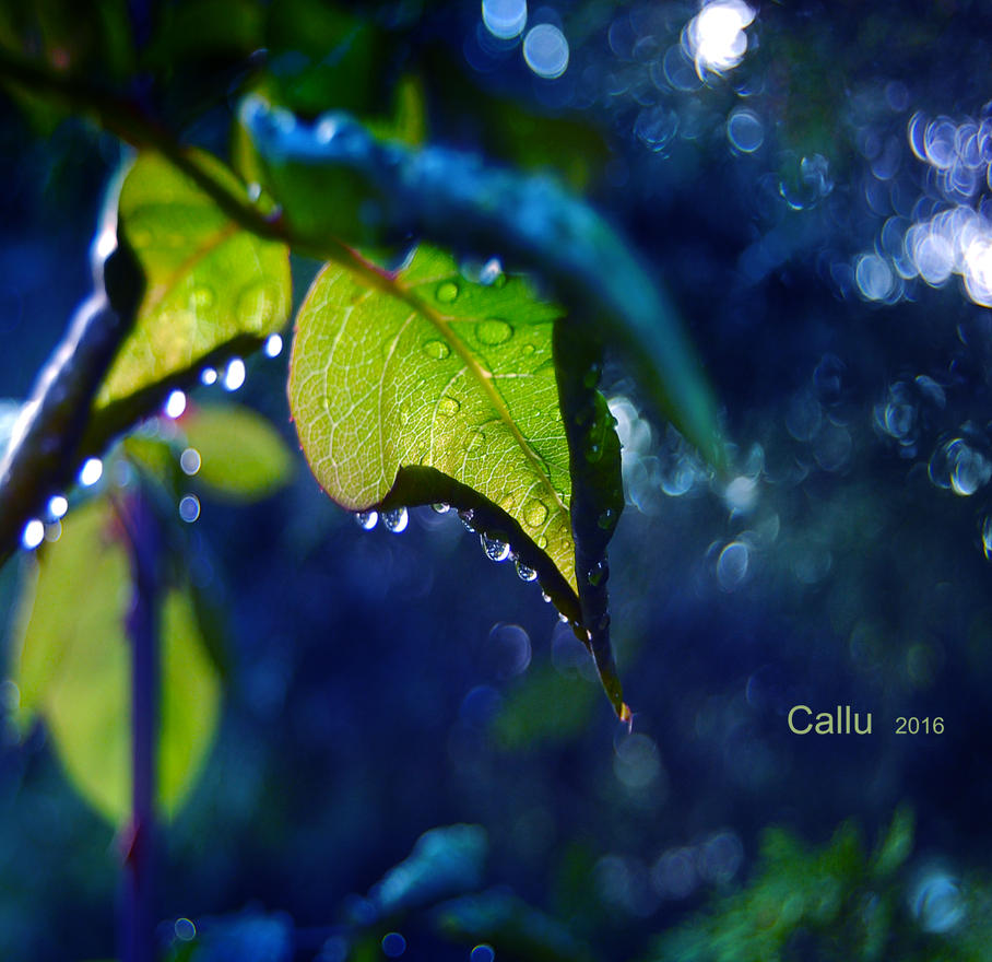 Green and Blue by Callu