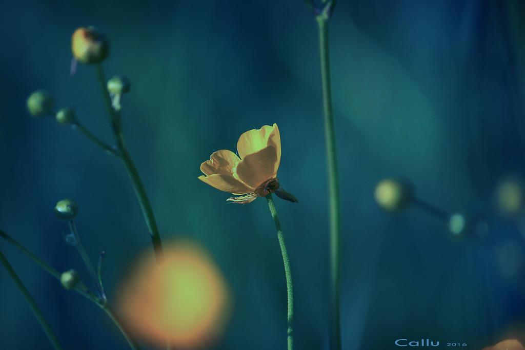 BBBBlue by Callu