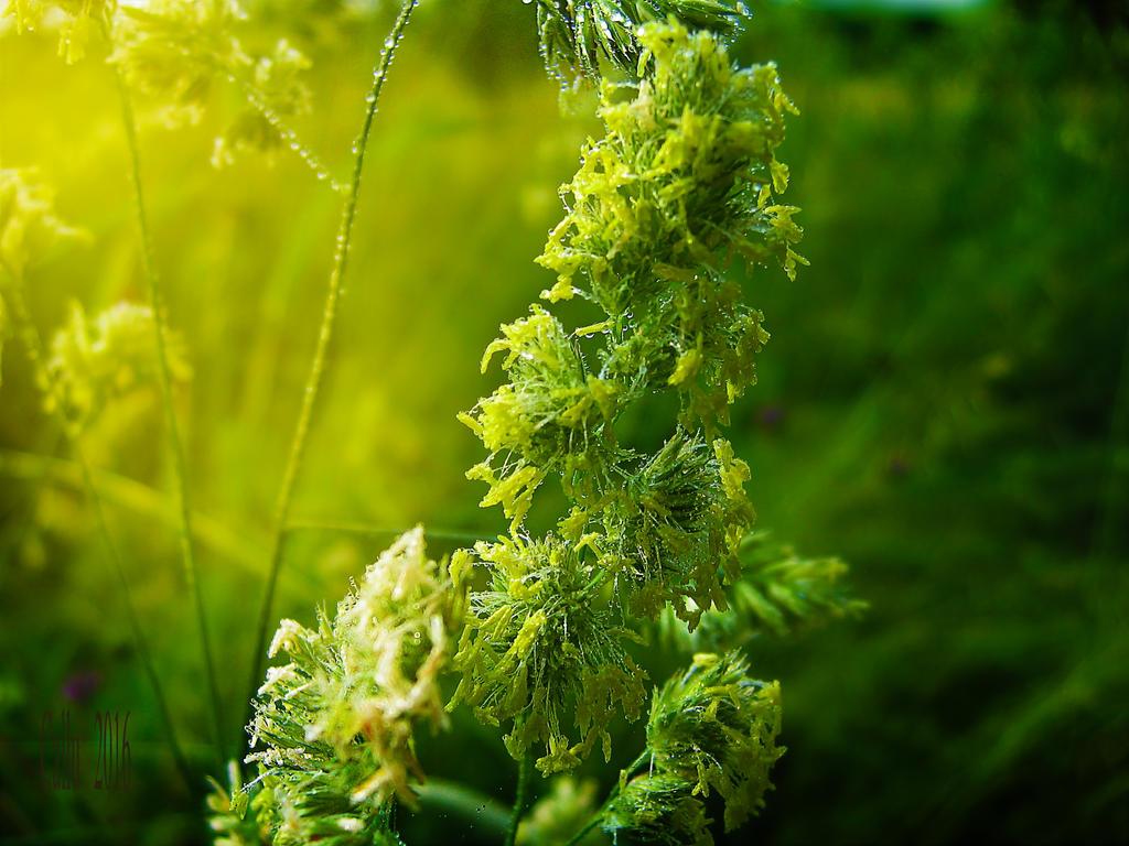 Sparkling Green R. by Callu
