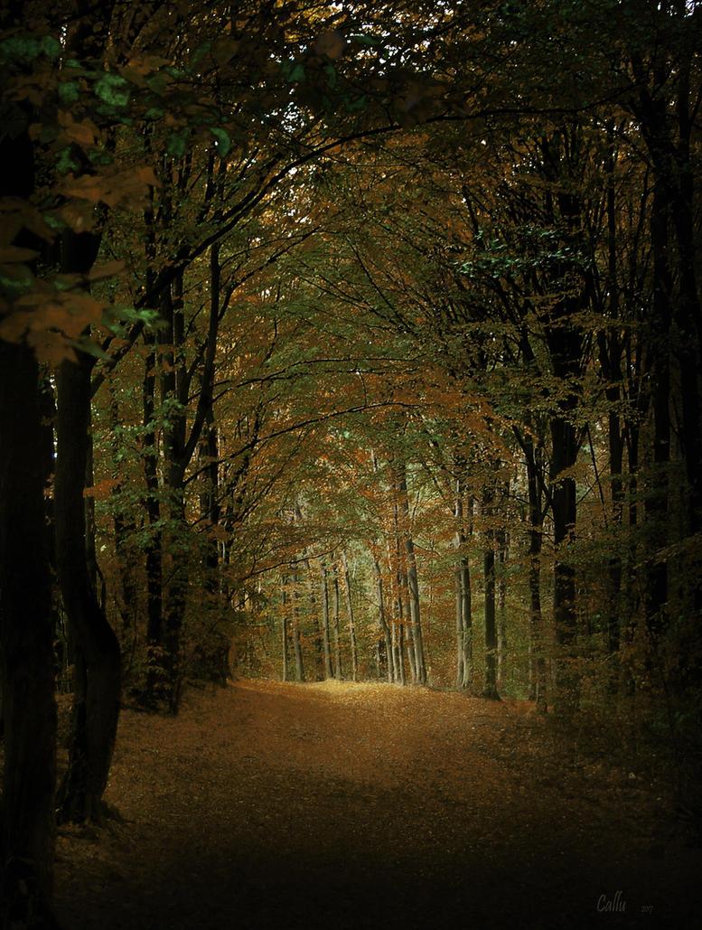 Forest Depth by Callu