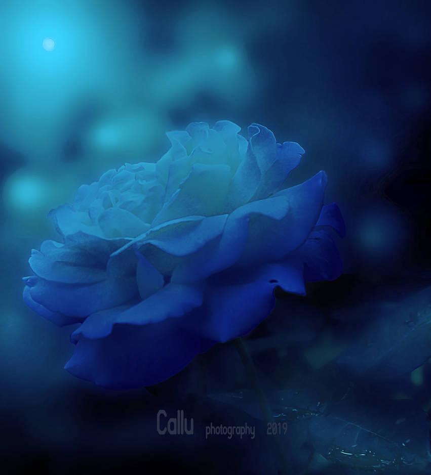 Blue Reshaded by Callu
