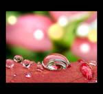 Pinks I