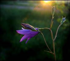 Bluebell by Callu