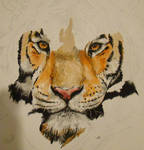 Tiger painting progress