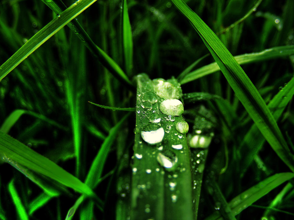 Rain Drops by ~Rameez-K on deviantART