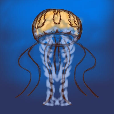 Jellyfish - Sketch This by ursus327