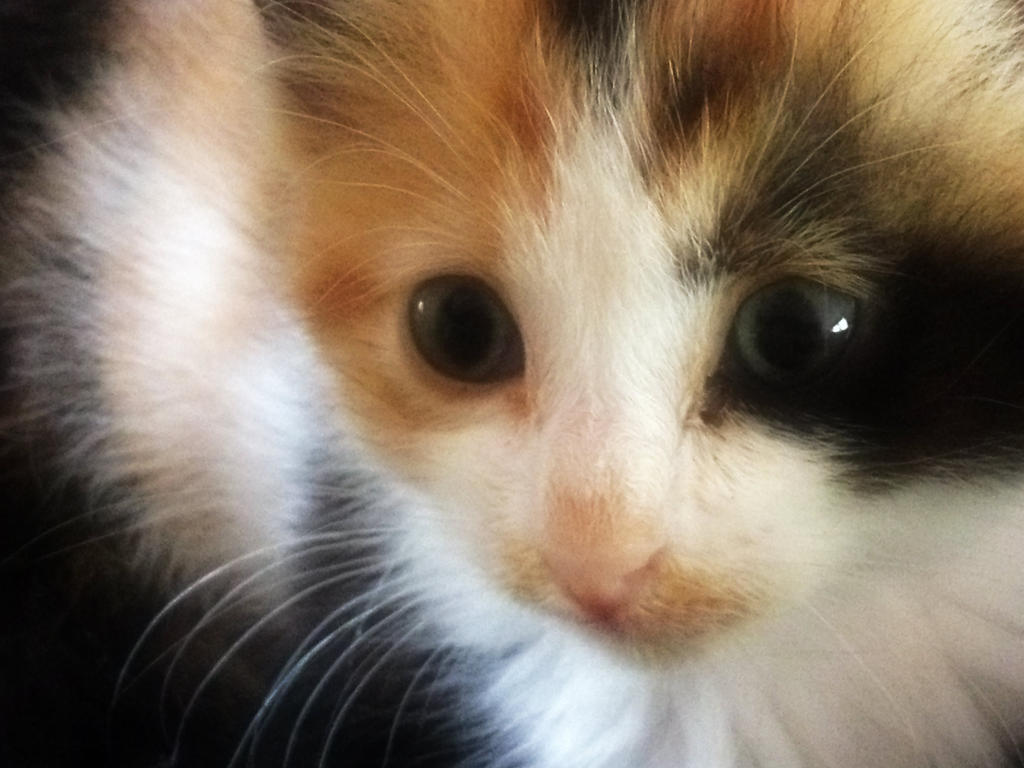 Peaches 5 weeks old 4 by feariedaisy