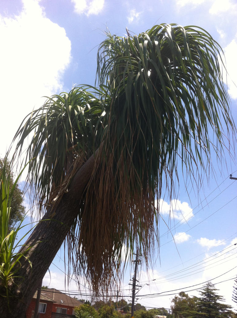 Mop top Palms on a Sunny day by JBG666
