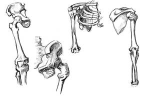 Skeleton study 1 by WaterMage