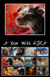 A Year with Kira by eugeal