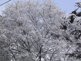Frosty Tree by eugeal