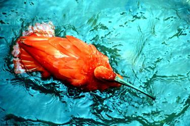 Scarlet Ibis by DavidGrieninger