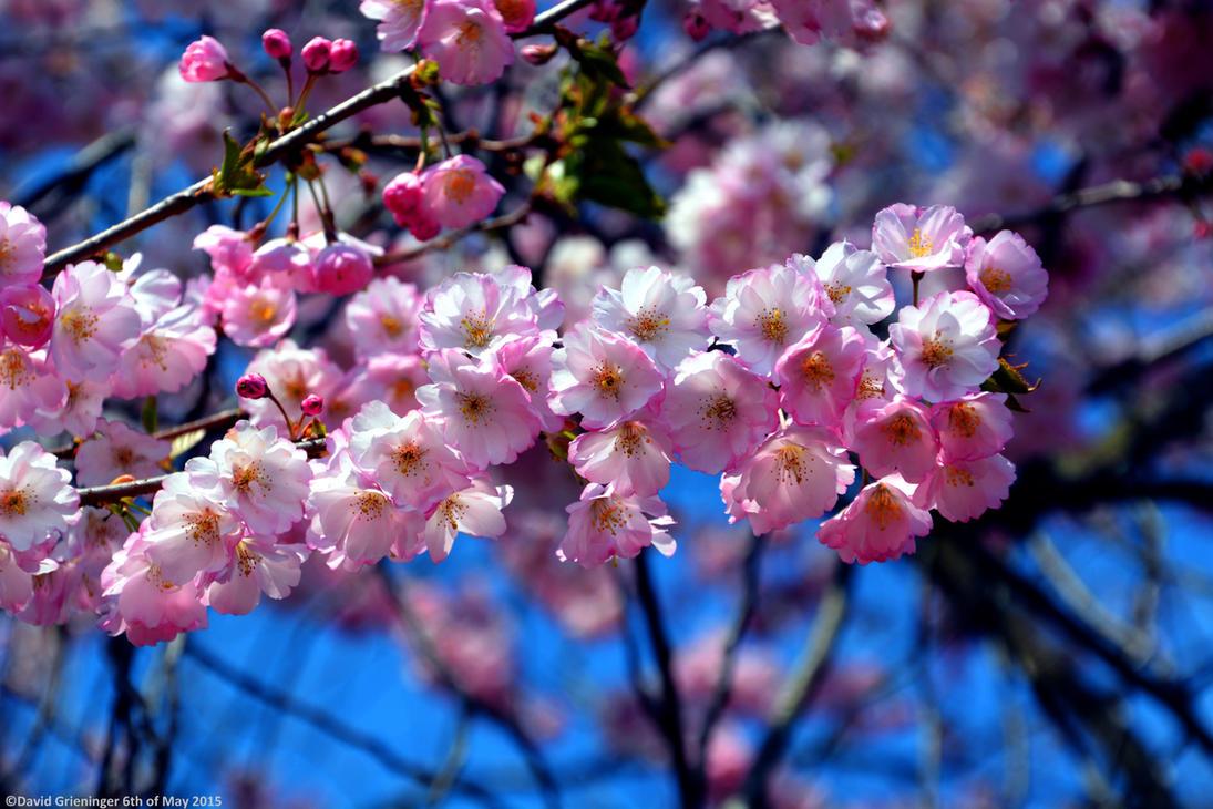Spring awakening by DavidGrieninger