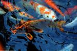 Exotic Koi by DavidGrieninger