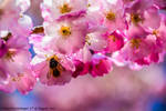 When Spring Returns by DavidGrieninger