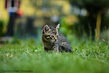 Tiny Garden Explorer by DavidGrieninger