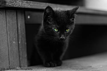 Little Panther by DavidGrieninger