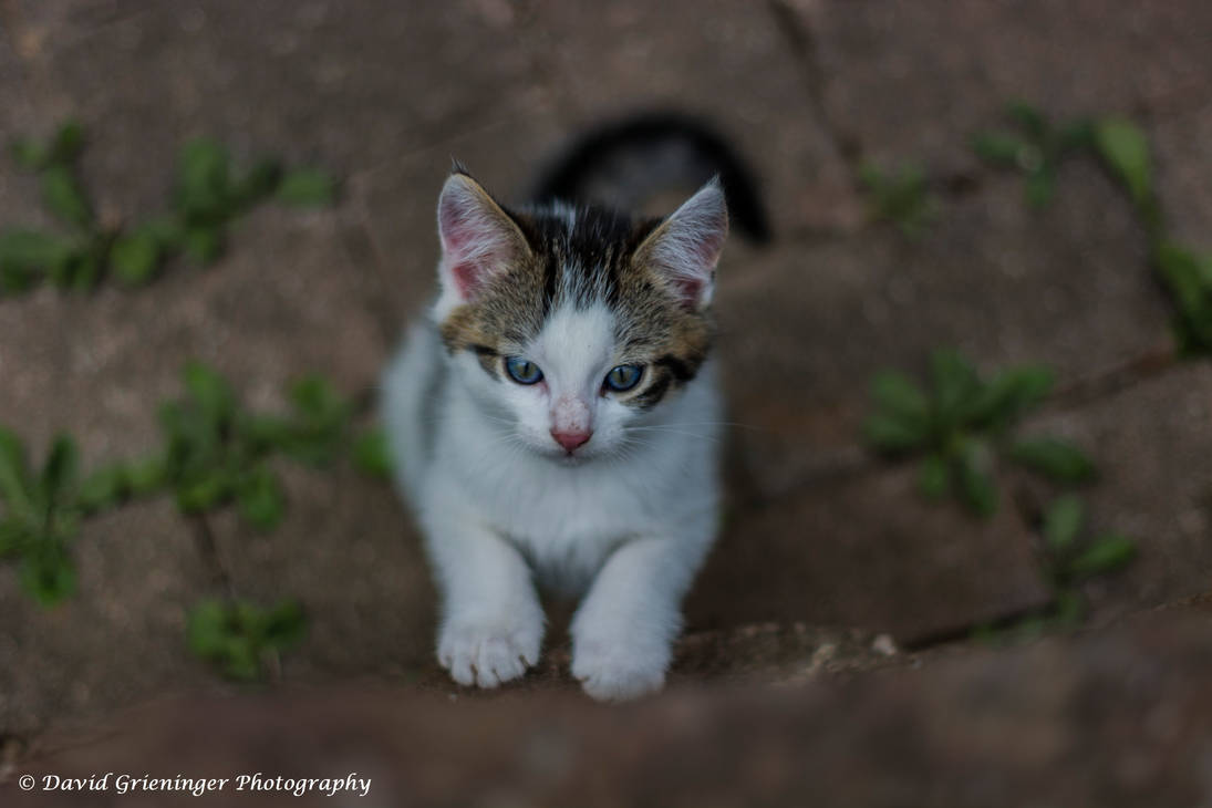 Ms. Curious by DavidGrieninger