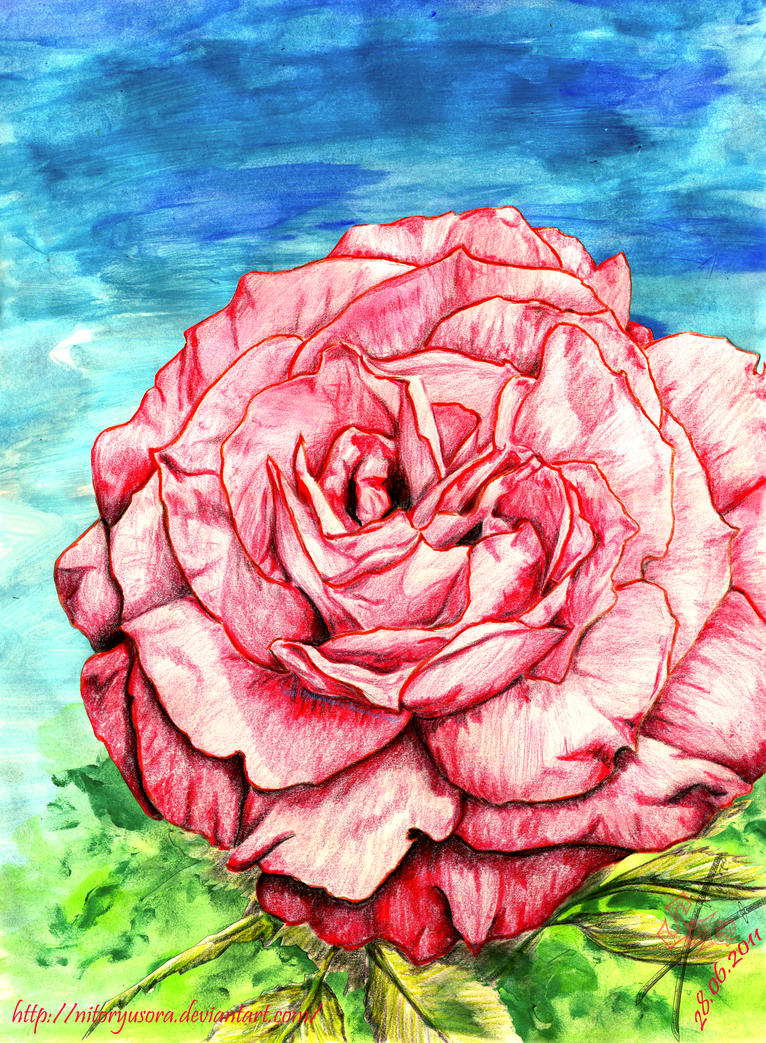 Red Rose by NitoryuSora