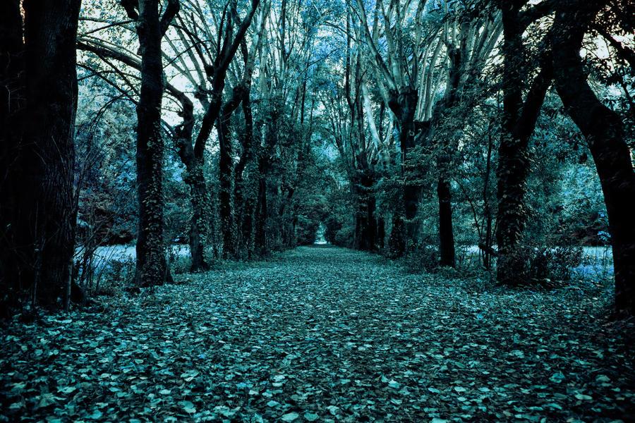 A forest by Kaminski83