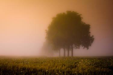 One Fine Morning by DerekToye