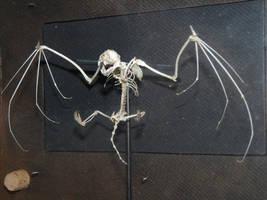 Esqueleto armado de murcielago