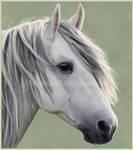 Random Horse Portrait II