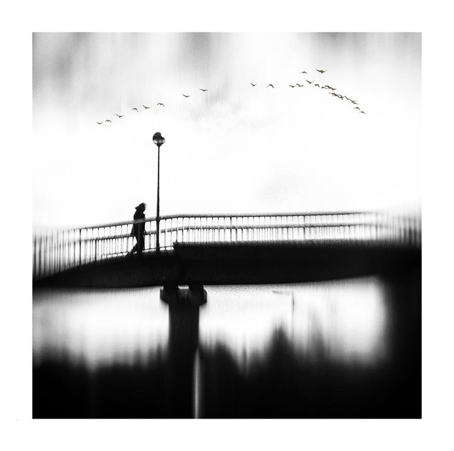 Birds by WomanofDarkVisions