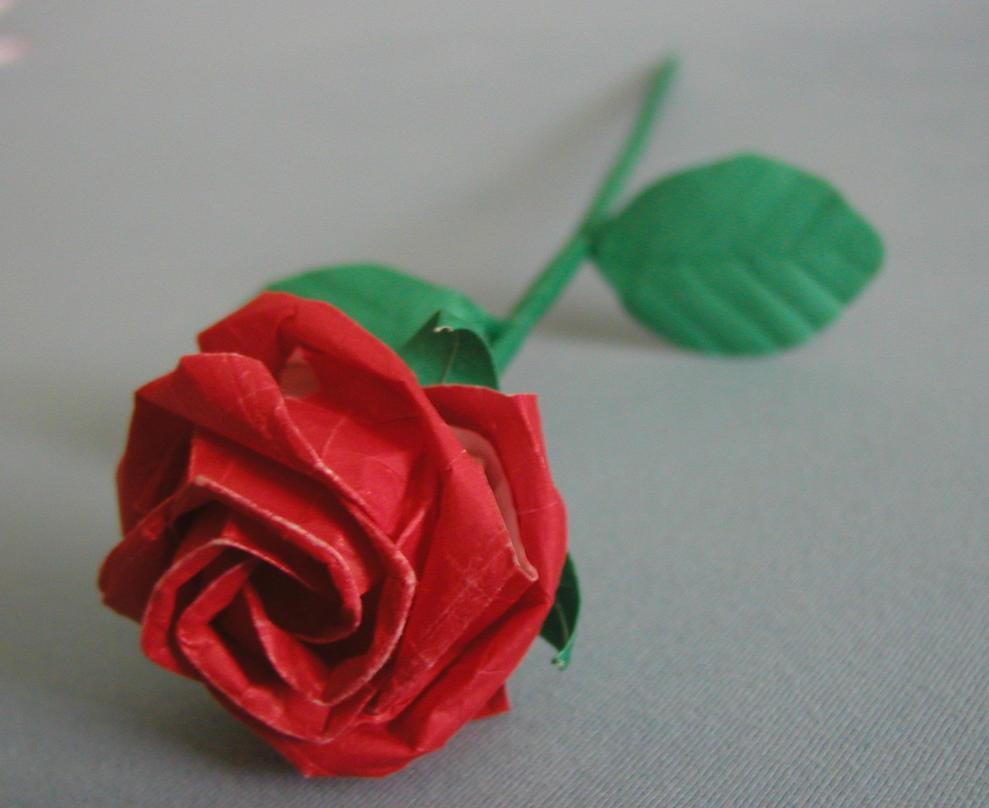 Calyx Kawasaki Rose
