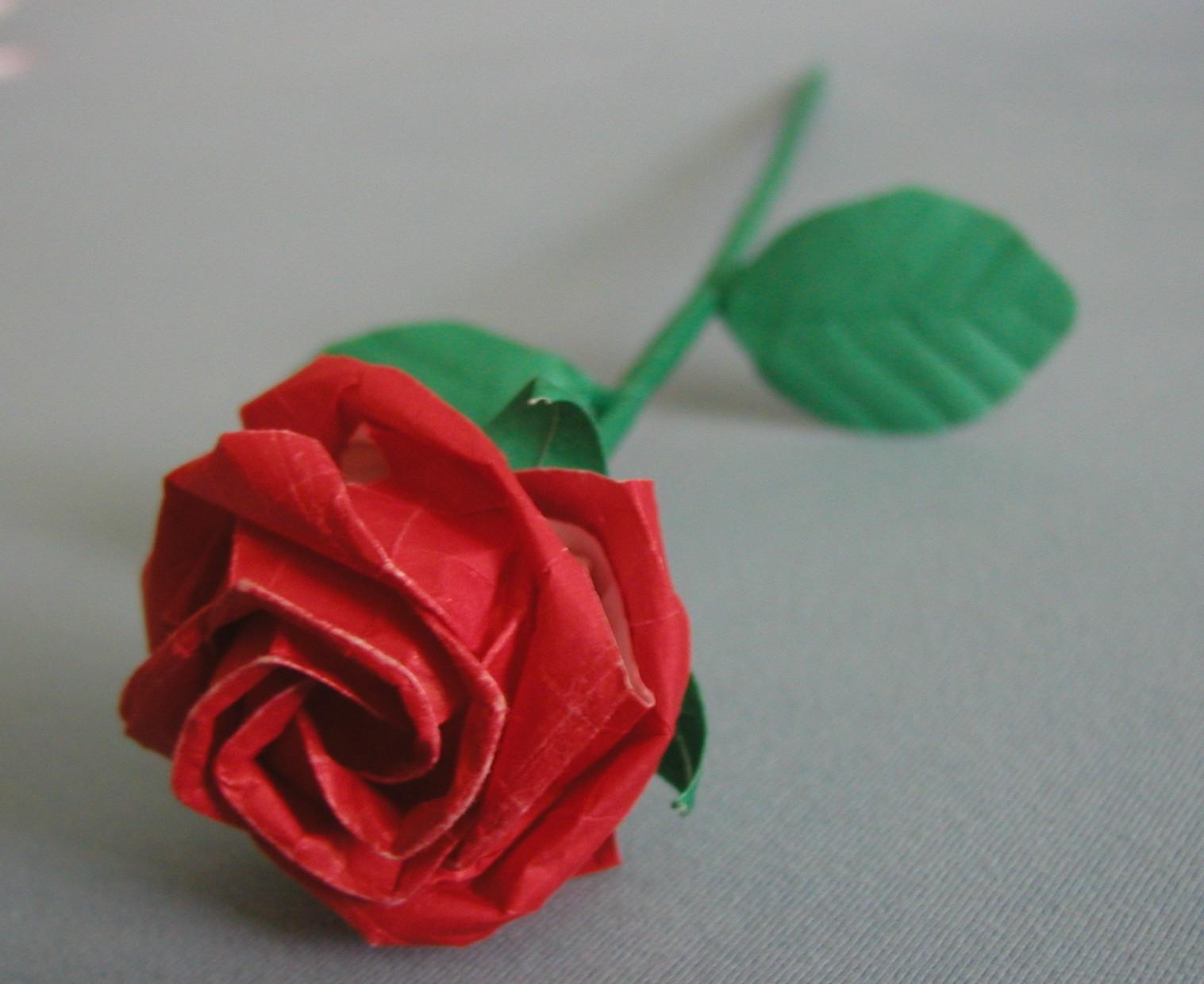 New kawasaki rose by UzeninaG on DeviantArt - photo#16