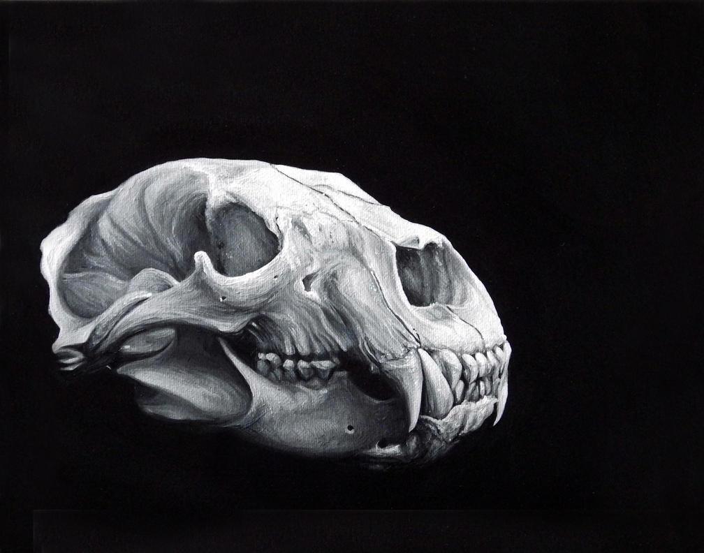 Bear Skull Study by benke33